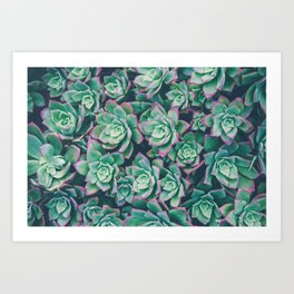 succulent garden Art Print