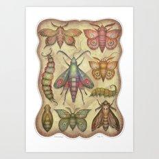Entomology Tab. V Art Print