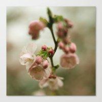 blossom Canvas Prints featuring blossom by EnglishRose23