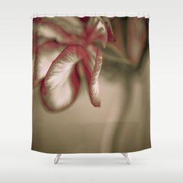 Geranium 2 Shower Curtain