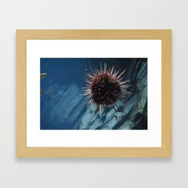 Sea Urchin 2 Framed Art Print