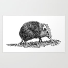 Black Shrew Art Print