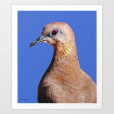 Dove closeup on blue Art Print