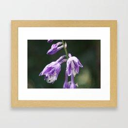 Purple Hosta Flowers Framed Art Print