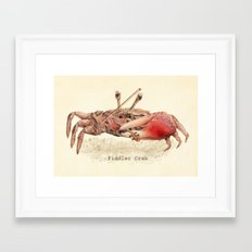 Fiddler Crab Framed Art Print