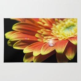 Macro of a water drop on orange gerbera flower with lens flare. Rug