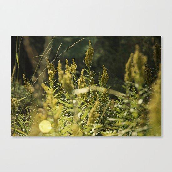 Mountain Meadows 01 Canvas Print