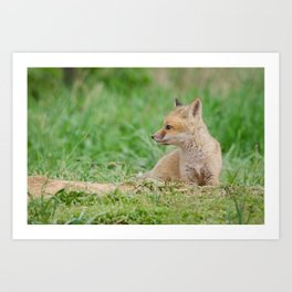 Chillin Baby Red Fox Pup in Meadow Animal / Wildlife Photograph Art Print