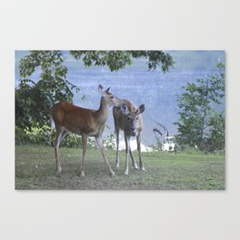 Early Evening Visitors Young Deer -Debra Cortese photo art Canvas Print