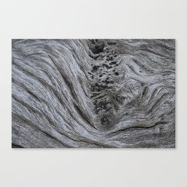 Driftwood #4 Canvas Print
