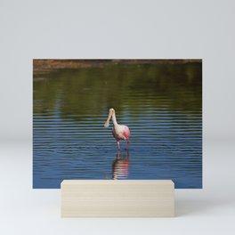 Roseate Spoonbill at Ding I Mini Art Print