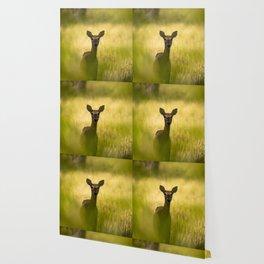 Keeping Tabs - Watchful Young Deer Through Tree Leaves in Wyoming Wallpaper