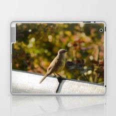 Little Bird Sitting On A Bench Laptop & iPad Skin
