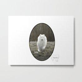 Sacha's World; Samoyed Portrait Metal Print