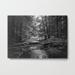 Enchanted Forest in black and white Metal Print
