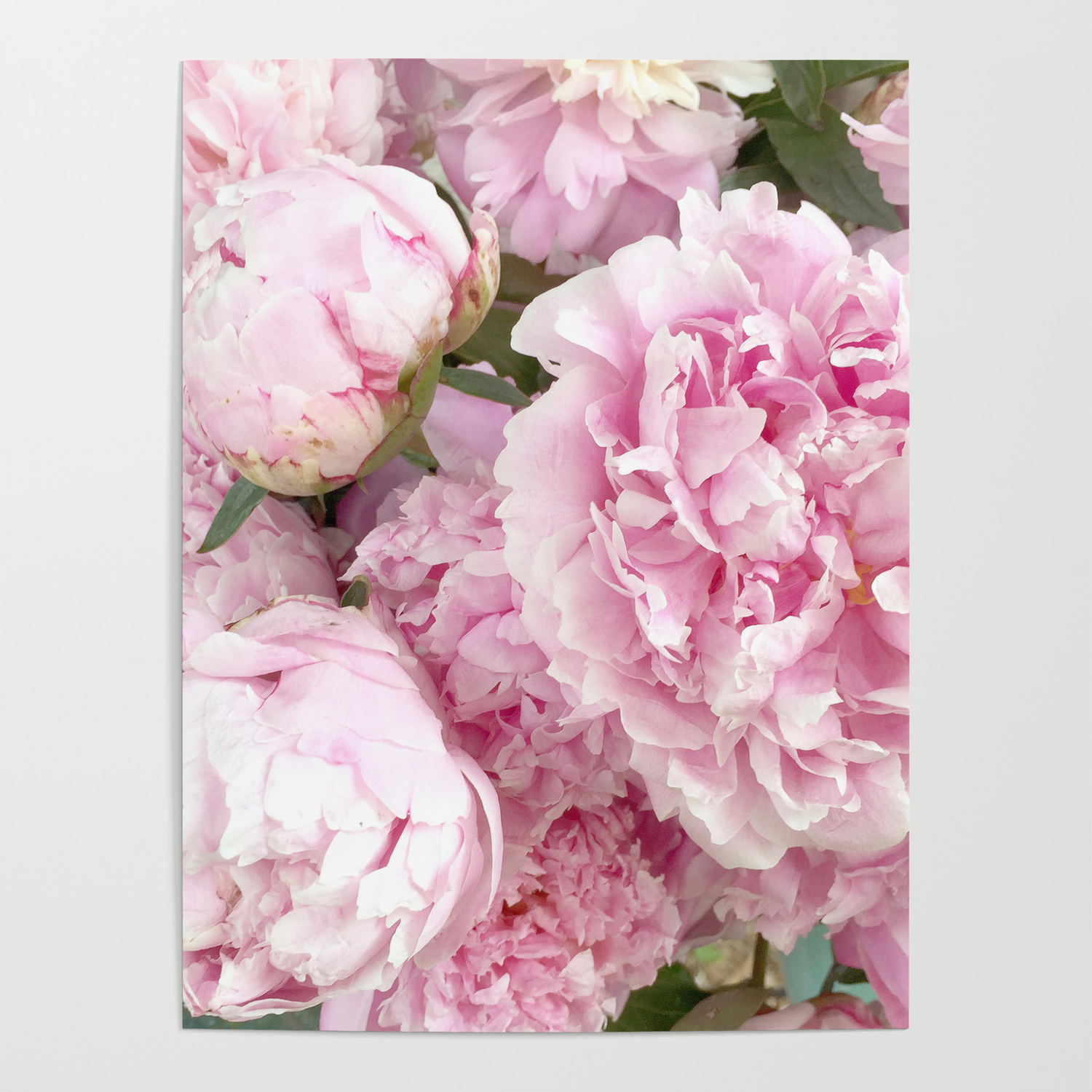 Pink Shabby Chic Peonies Garden Peony Flowers Wall Prints Home