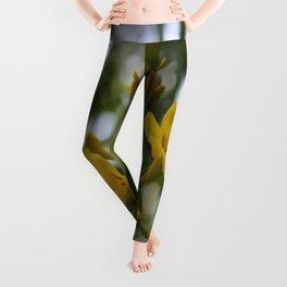 Shaded Carolina Jessamine Leggings