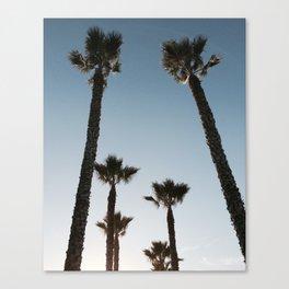 California Palms Canvas Print