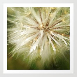 Flower of wishes Art Print