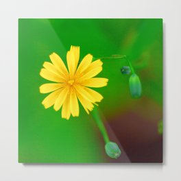 Nature in Colour 1 Metal Print