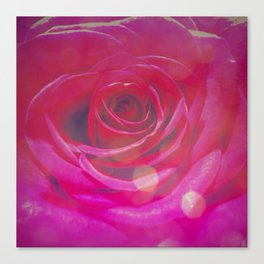 Transcendent Rose 2 Canvas Print