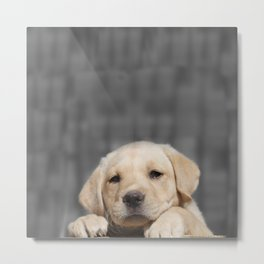 A dog in Bag Metal Print