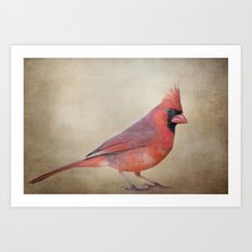 The Red Cardinal Art Print