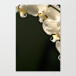 Orchid flowers  Canvas Print
