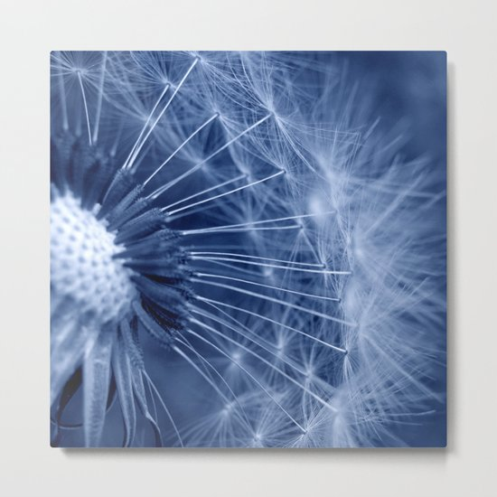 blue dandelion II Metal Print