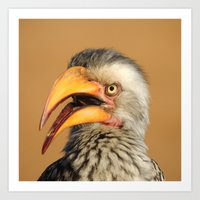 Hornbill in South African Art Print
