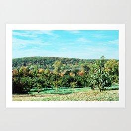 Apple Orchard // Upstate New York Art Print