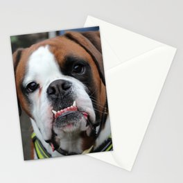 Boxer dog friend Stationery Cards
