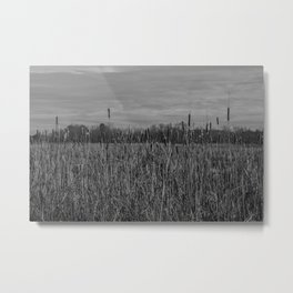 Cattails and reeds in the marsh Metal Print