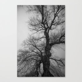 Nature Photography Weeping Willow | Lungs of the Earth | Black and White Canvas Print
