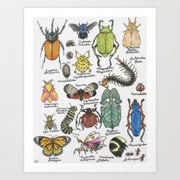 Bug Collection Art Print