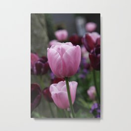 Tulips on Pink Metal Print