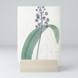 Flower 1355 scilla plumbea Lead coloured Scilla14 Mini Art Print