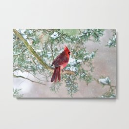 Look Beyond: Northern Cardinal Metal Print