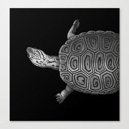 terrapin Canvas Print