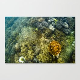 Turtle reef launch Canvas Print