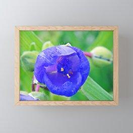 Inside the Blue Flower Framed Mini Art Print