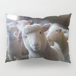 Sheep Looking at Camera Pillow Sham
