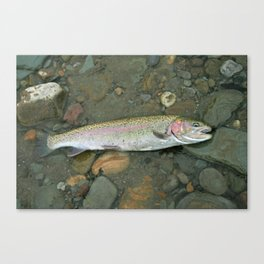 Rainbow trout at rest Canvas Print