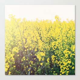 Yellow Raps Field Canvas Print