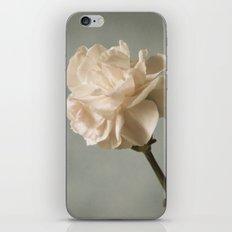White carnation iPhone & iPod Skin