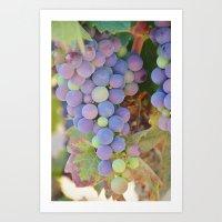 Vineyard Colors Art Print