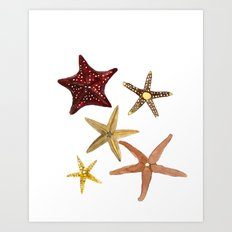 Ocean Treasures No.2 Starfish Art Print