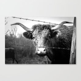 Highland Cow Longhorn Barbed Wire Fence Black and White Canvas Print