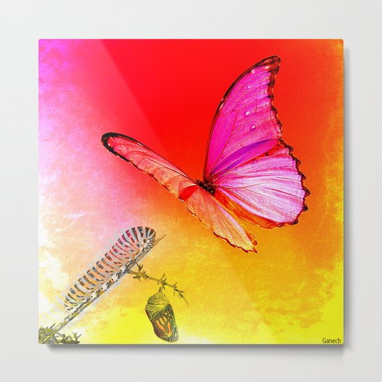 The butterfly, the caterpillar and the chrysalis Metal Print