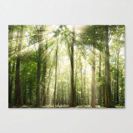 Sun Rays Through Forest Treetops Nature / Botanical Landscape Photograph Canvas Print